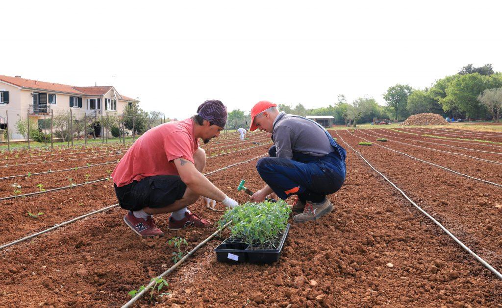 Sadimo svježe povrće i začinsko bilje u našem vrtu