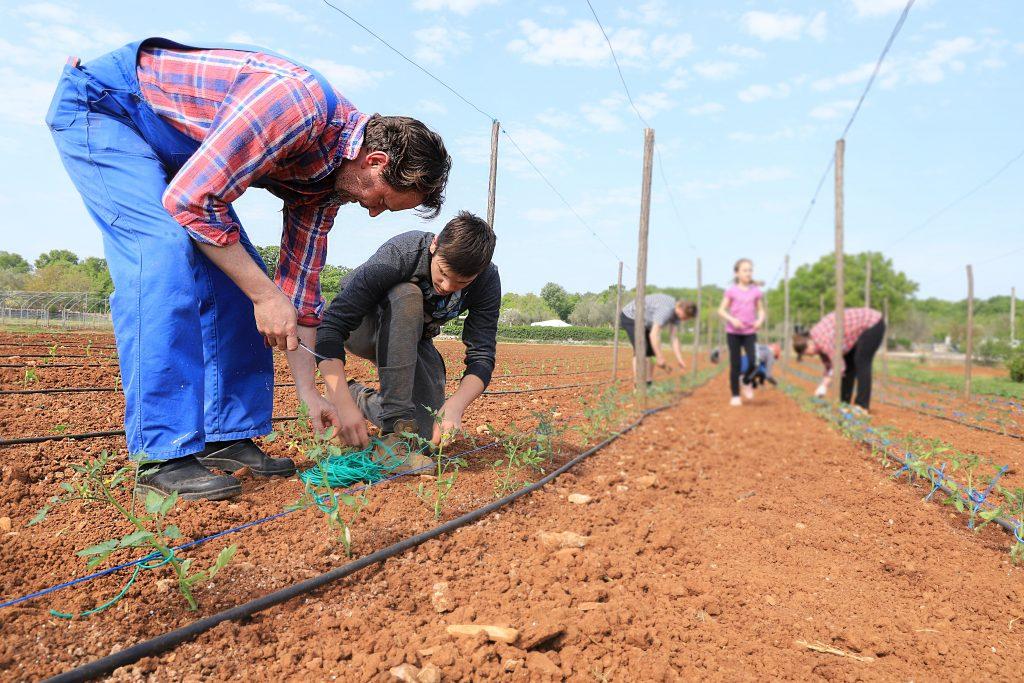 The Sabalja family in planting