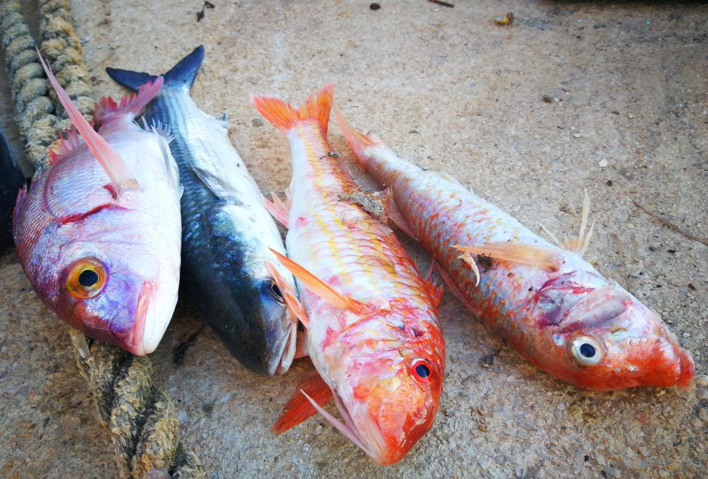 Gourmet Premium Seafood Restaurant - Trlja fish